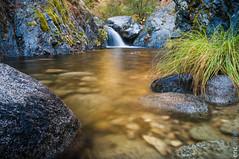 Golden Ticket (Brandy Creek Falls)