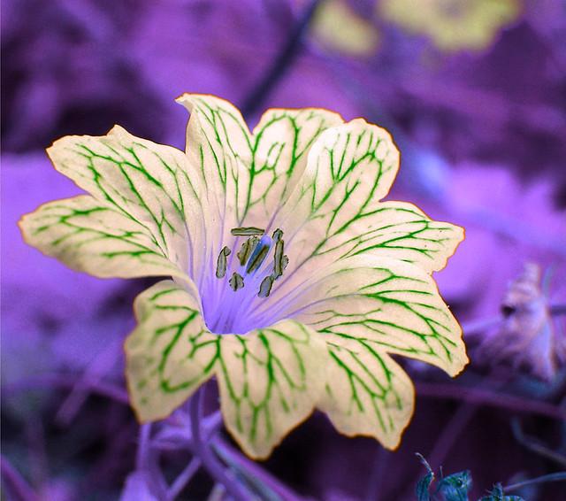 Aimez vous les fleurs