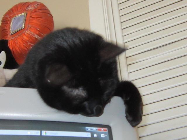 Neko watches the cursor