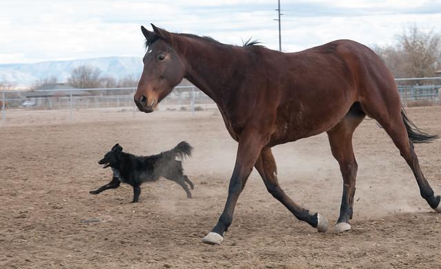 Dog Rescue Prescott Az
