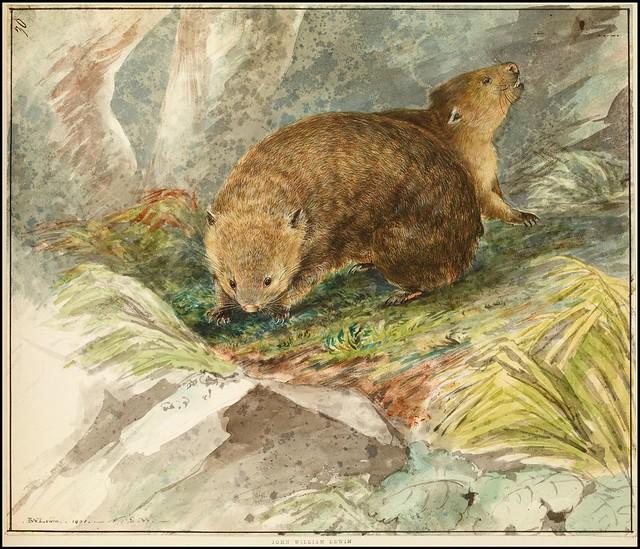 Wombats 1801