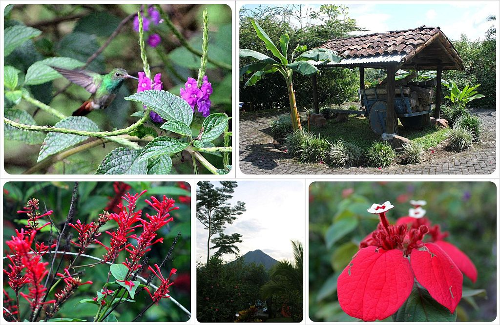 Mountain Paradise Hotel Arenal Costa Rica Flowers