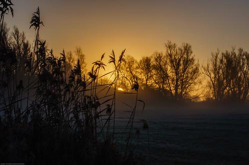 trees mist field fog sunrise reeds skåne sallerup