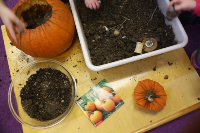 pumpkin planting