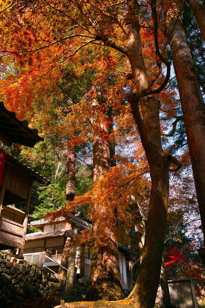 天神社 #1
