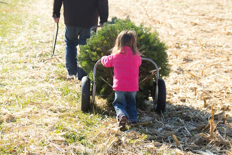 ChristmasTreeFarm12-7833.jpg