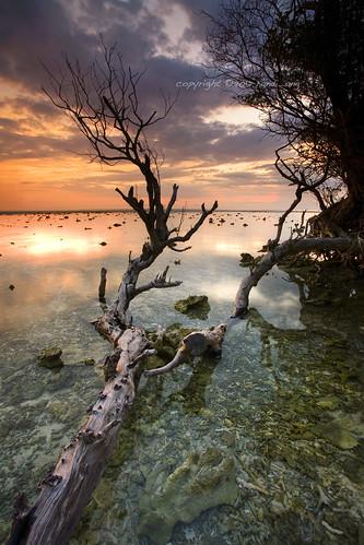 sunset seascape tree beach indonesia landscape dead coast asia south tide low east ang gili lombok randi trawangan stunningskies
