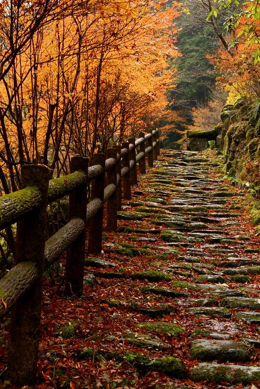 IMG_4787_11-23 Yasui Valley