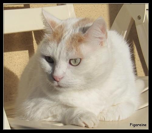 Mouna ( mon bon profil ) by Figareine- Michelle
