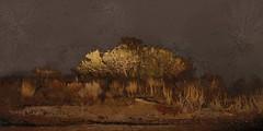 <strong>AZIZ + CUCHER - </strong> Scenapse #8 (Desert Nocturne)<br />Aziz + Cucher, Scenapse #8 (Desert Nocturne),  c-print on Endura Metallic paper with diasec mount, 181 cm x 92 cm, 2010