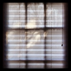 #window #sunlight #morning