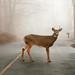 deer by Homemade