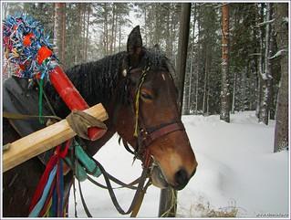 Лошадка по имени Шалунья