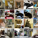 November adoptions by Goathouse Refuge