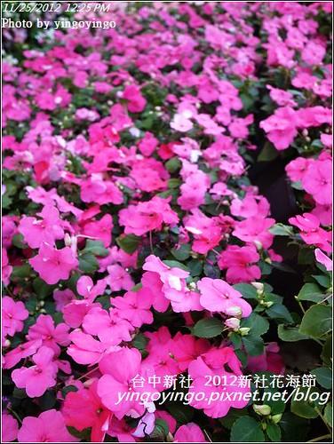 台中新社_2012新社花海節20121125_R0010517