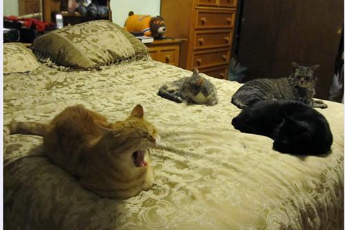 4 CATS 4