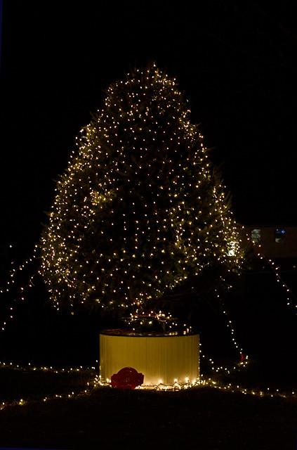 CR2_6498 Tree of lights