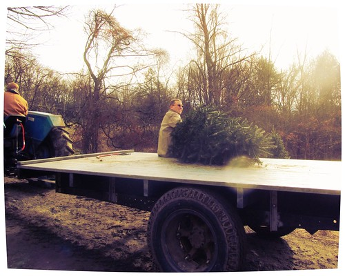 Bringing In the Tree