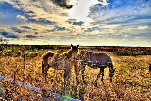 horses nature clouds landscape florida gainesville prairie hdr paynes paynesprairiepreservestatepark paynesprairielookout441