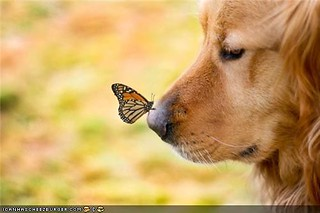 dog with butterfly on nose