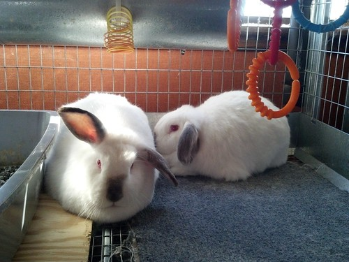 Trixie and Dixie at Virginia Rabbit Rescue