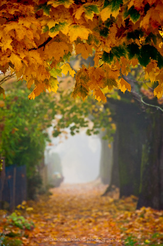 autumn trees light urban blur color colour leaves fog vancouver fence moody path branches sidewalk bluechameleon sharonwish bluechameleonphotography littledoorstoelsewhere