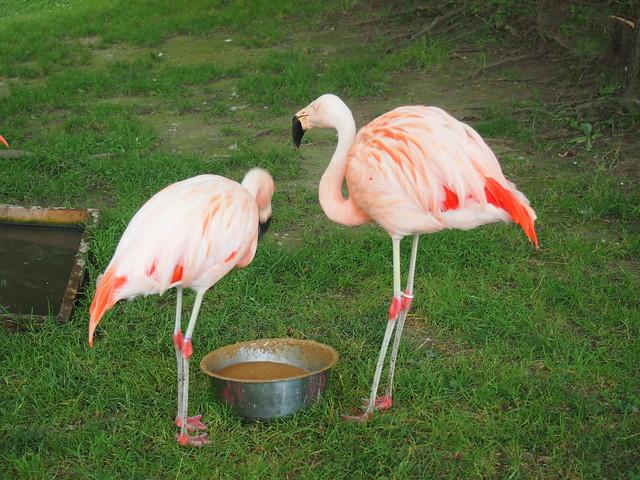 夏の旭山動物園で写真を撮りまくってきました