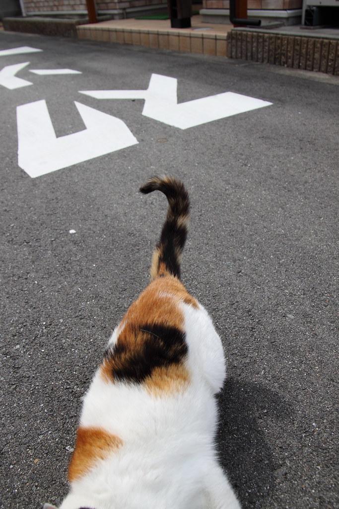 三毛猫の尻尾
