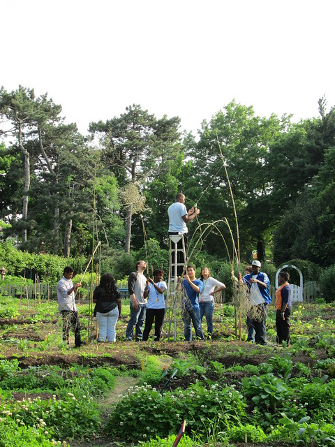 Building a bean trellis with bamboo in the Children's Garden. Photo by GAP.