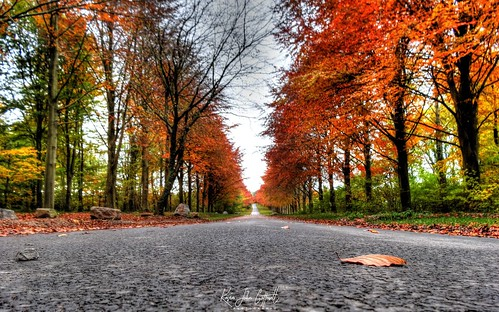 autumn fall colours tree lined road perspective coronationavenue leighwoods woodland forest nationaltrust forestrycommission bristol england uk hdr sonydschx20v photomatixpro tonemapped