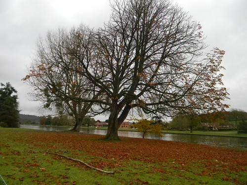 Tree by the Thames