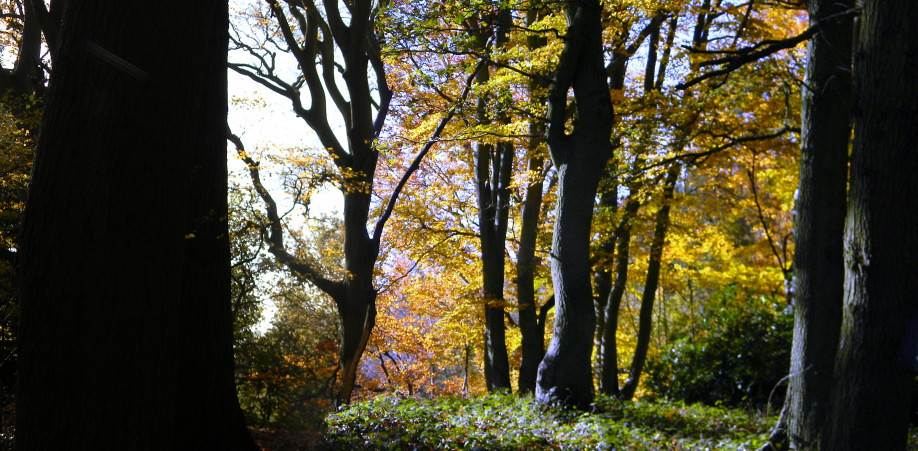 On the ridge Crowthorne to Sandhurst (avoiding Eversley)