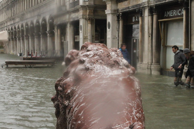 Lion's head, St Mark's Square, Venice floods 2012