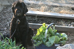 skippy with late fall harvest 052