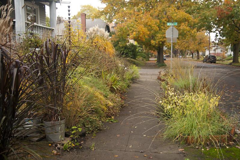 front garden november