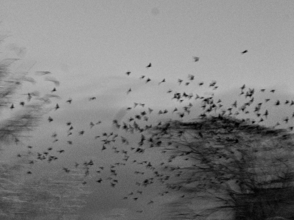 Locusts 2