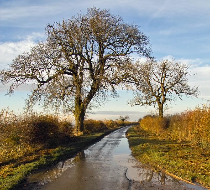 Ash Trees in November, Middlegate
