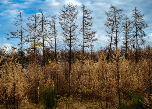 denmark militær jdr trainingarea holstebro øvelsesterræn centraldenmarkregion øtn
