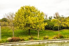 Parque Juan Carlos I - XXIV