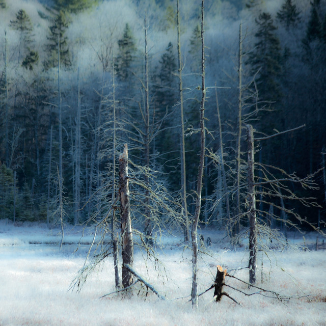 Manteau de gel... silence de mort au marais... je médite...!!!