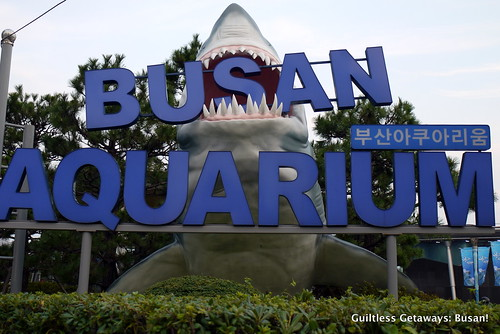 busan-aquarium.jpg
