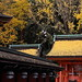 Ginkgo on the roof by Teruhide Tomori