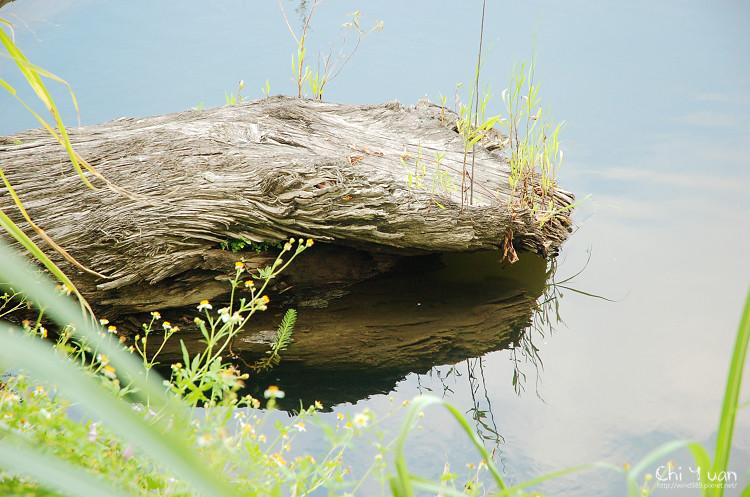 羅東林業文化園區-貯木池12.jpg