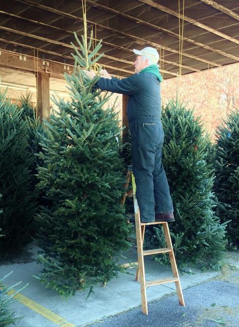selecting a christmas tree via homeologymodernvintage.com