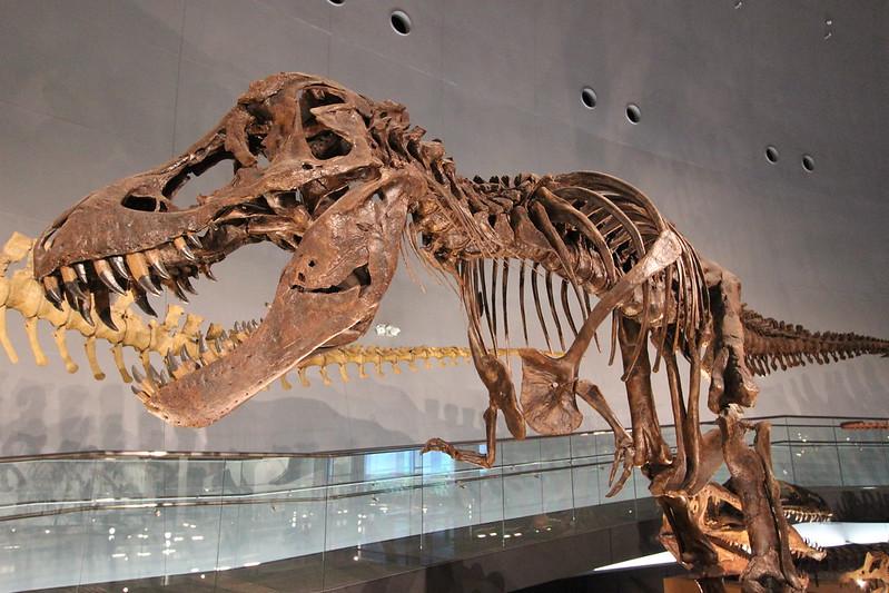 福井県立恐竜博物館 骨格模型 その4