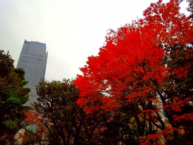 紅葉(ビビッド)