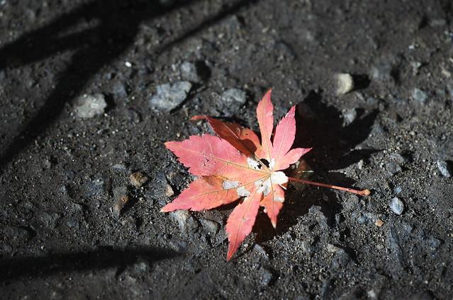 落葉 - 単