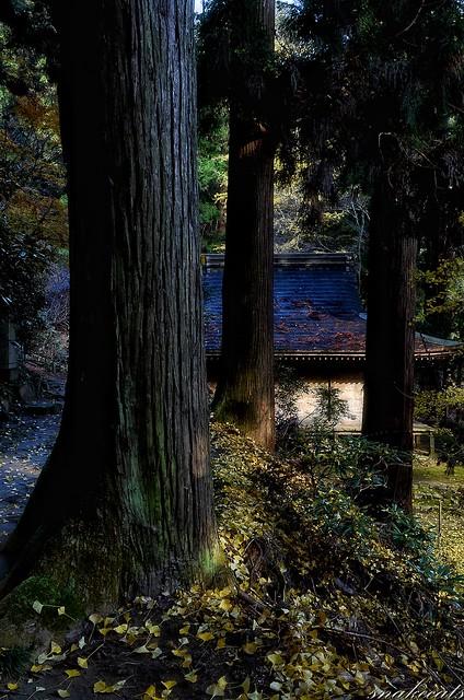 「融和」 室生寺 - 奈良