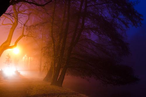 [フリー画像素材] 自然風景, 朝焼け・夕焼け, 森林, 風景 - デンマーク ID:201212080600