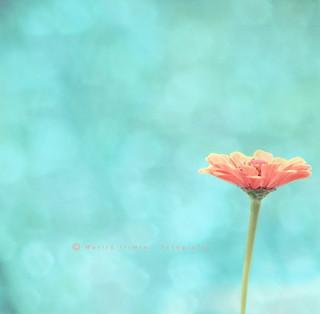 Una flor   ✿ Quinta flower ✿